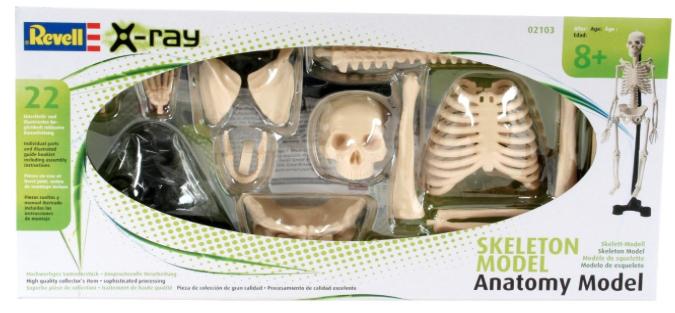Skelett-Bausatz